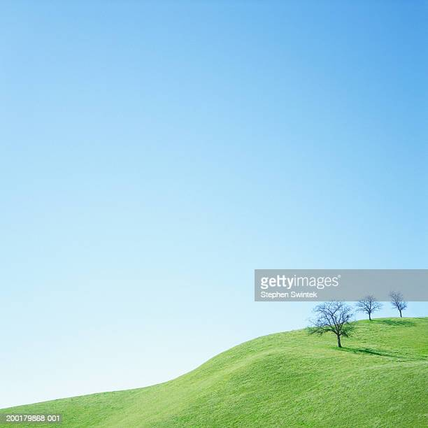 usa, california, corrizo plane national monument, oak trees on hill - clear sky stock pictures, royalty-free photos & images