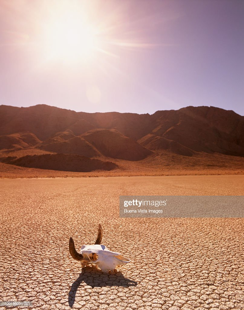 USA, California, Death Valley, cattle skull on the Racetrack Playa : Stock Photo