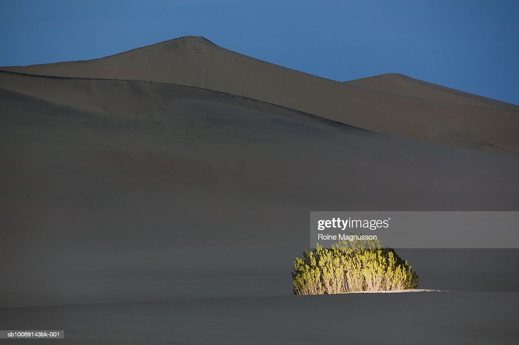 USA, California, Death Valley, illuminated bush in desert : Stockfoto