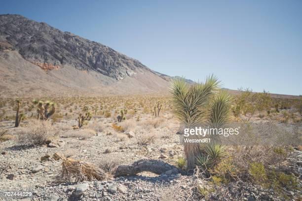 USA, California, Death Valley National Park