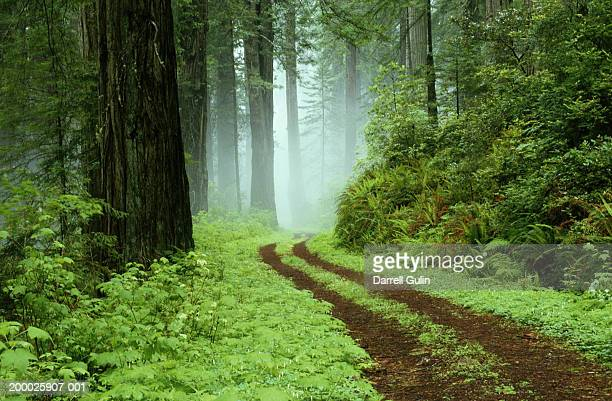USA, California, Del Norte Redwoods State Park, path through forest