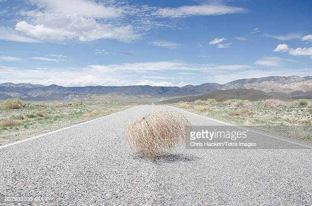 usa, california, empty road with tumbleweed - tumbleweed stock photos and pictures