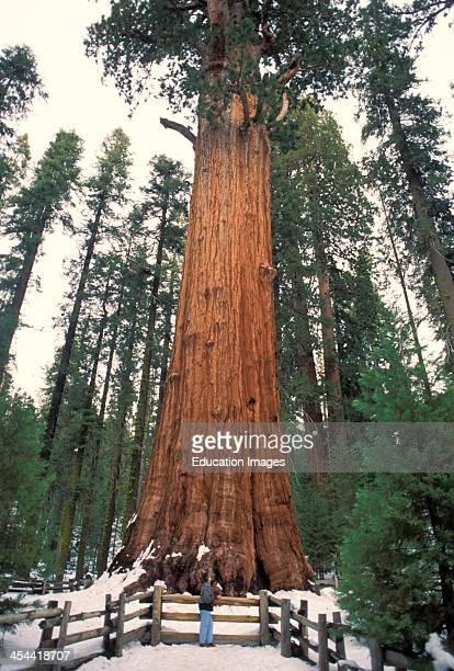 California General Sherman Sequoia National Park