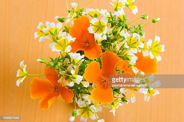 California Golden Poppies in a vase
