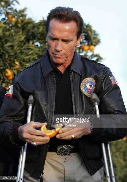 California governor Arnold Schwarzenegger inspects an orange picked from a tree at Keith A Nilmeier Farms January 16 2007 in Fresno California An...