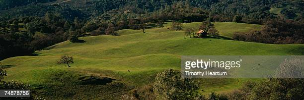 usa, california, green hills and oak trees with old barn in background - timothy hearsum stock photos and pictures
