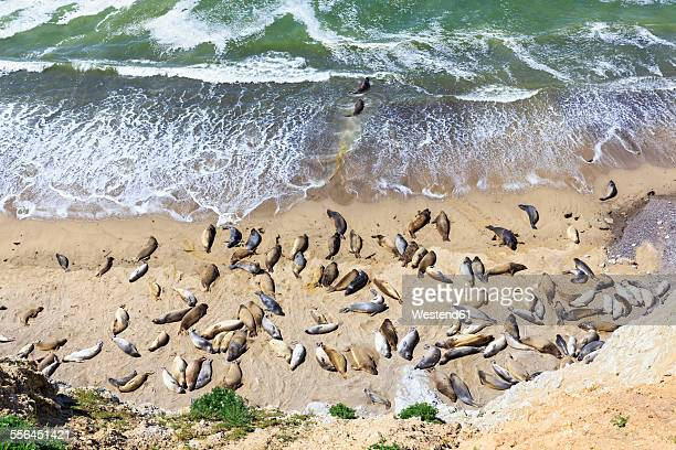 USA, California, Marin County, Point Reyes National Seashore, View to beach with sea elefants