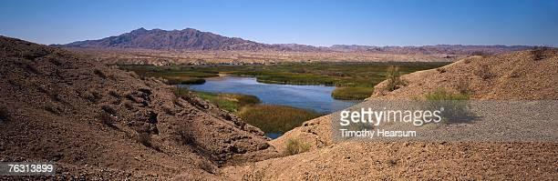 usa, california, mojave desert, colorado river - timothy hearsum stockfoto's en -beelden