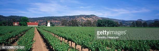usa, california, napa, vineyard - timothy hearsum stock photos and pictures