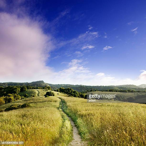 usa, california, oakland, wildcat canyon regional park - oakland california stock pictures, royalty-free photos & images