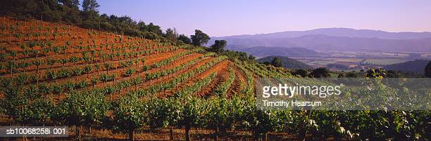usa, california, oakville, vineyard - timothy hearsum bildbanksfoton och bilder