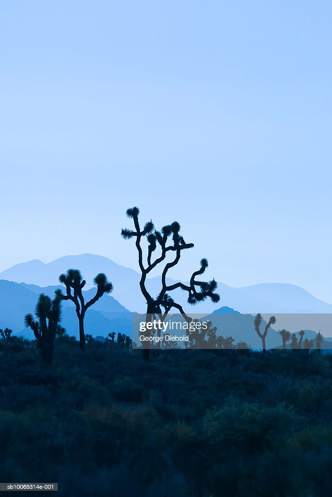 USA, California, Palm Springs, Joshua Tree National Forest, dusk : Foto stock