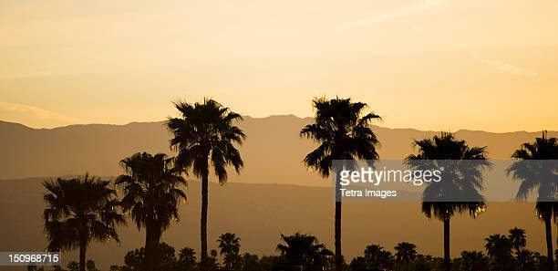 USA, California, Palm Springs, Palm trees silhouetted at sunset