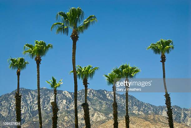 usa, california, palm springs, palms and mountains - palm springs stock-fotos und bilder