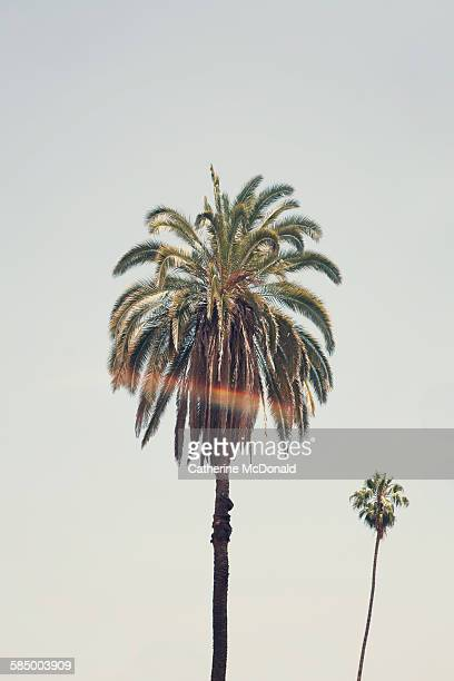 california palm trees and sunburst - hollywood california stock pictures, royalty-free photos & images