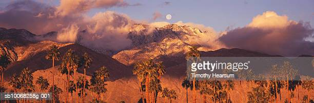 usa, california, palm trees at sunrise - timothy hearsum stock photos and pictures