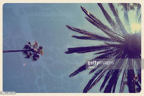 california palm trees - vintage postcard - hollywood california stock pictures, royalty-free photos & images