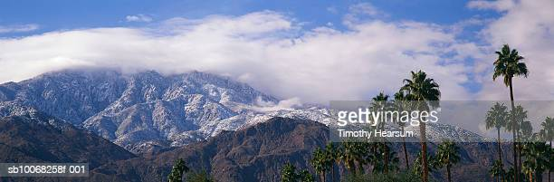 usa, california, palm trees with snow covered mountains - timothy hearsum stockfoto's en -beelden