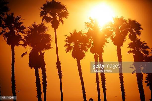 En Californie