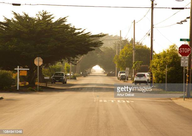 california road with cypress trees creating tunnel effect. - town stock pictures, royalty-free photos & images