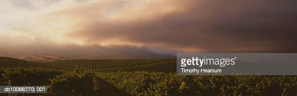 usa, california, salinas valley, dramatic sky over vineyard - timothy hearsum imagens e fotografias de stock