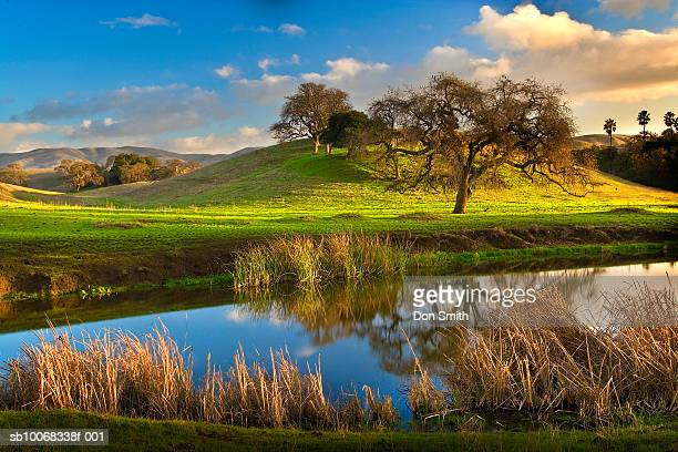 usa, california, san benito county, pond and trees - don smith stock photos and pictures