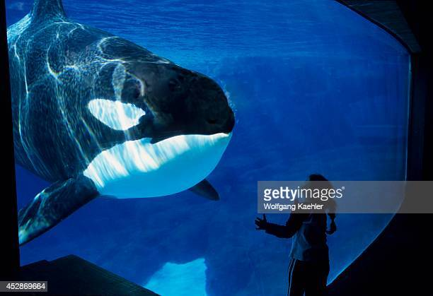USA California San Diego Sea World Killer Whale Underwater Girl 2006