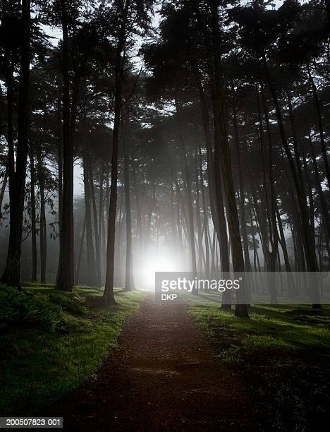 USA, California, San Francisco, light shining on footpath in forest