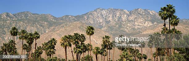 usa, california, san jacinto wilderness, palm trees in foreground - timothy hearsum ストックフォトと画像