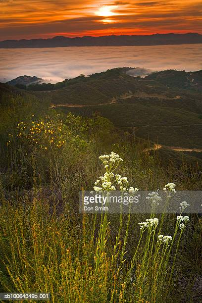 usa, california, santa clara valley, fog at dawn - don smith stock pictures, royalty-free photos & images