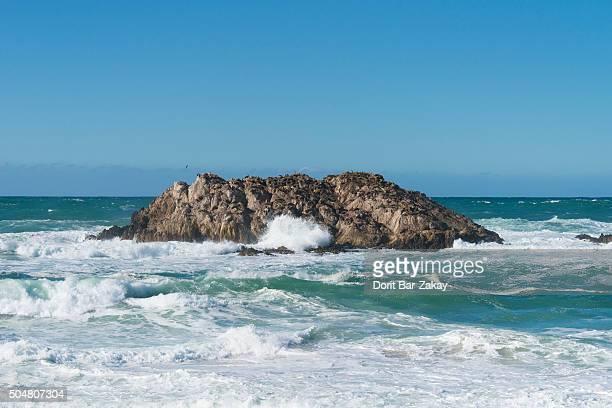 California Sea Lion (Zalophus californianus) at Seal Rock
