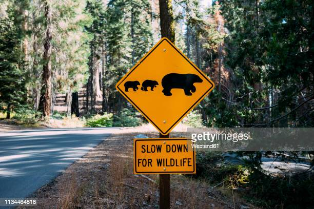 usa, california, sequoia natioal park, animal crossing sign, family of mum and baby bears - animal crossing stock pictures, royalty-free photos & images