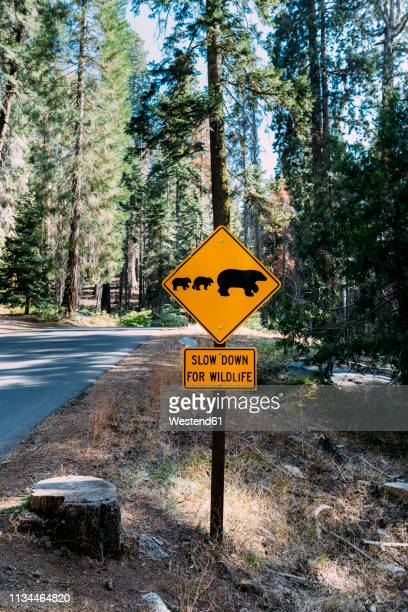 USA, California, Sequoia Natioal Park, Animal Crossing Sign, family of mum and baby bears