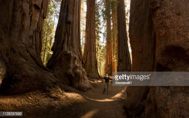 usa, california, sequoia national park, sequoia tree and woman, sun light - sequoia national park stock pictures, royalty-free photos & images