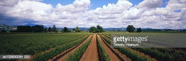 usa, california, sonoma county, vineyard rows with cloudy sky in background - timothy hearsum stockfoto's en -beelden