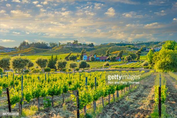 california spring vineyard in the temecula valley, ca - california stock pictures, royalty-free photos & images
