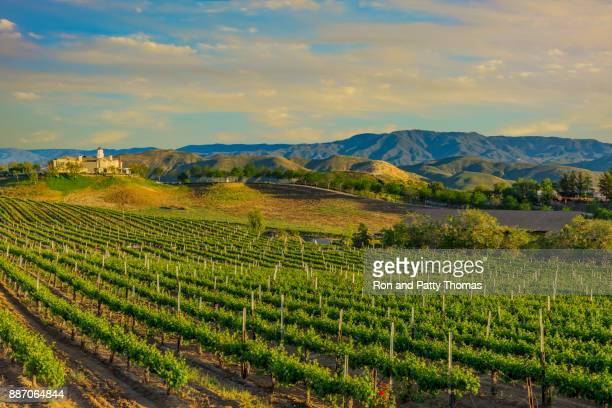 vinhedo de primavera de califórnia no temecula valley, ca - temecula valley - fotografias e filmes do acervo