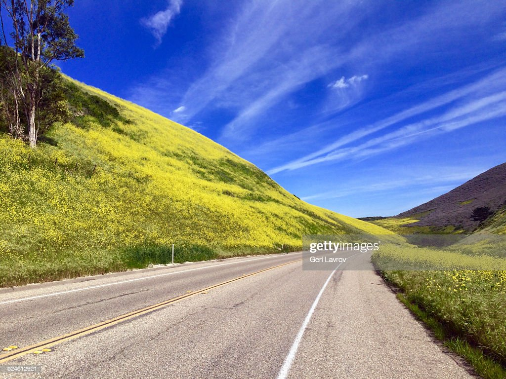 California State Route 1 Lined With Yellow Flowers Stock Photo