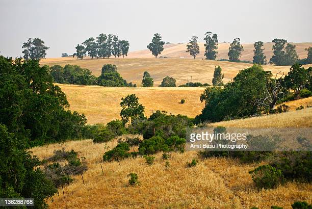 california summer landscape, golden brown grass - palo alto ストックフォトと画像