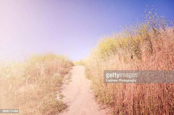 california super bloom - anaheim californië stockfoto's en -beelden