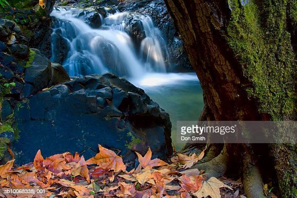 usa, california, uvas county recreation area, stream - don smith ストックフォトと画像