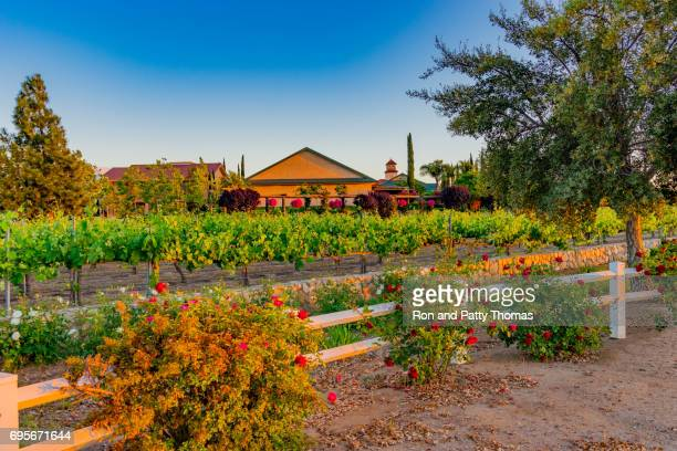 vinha da califórnia ao entardecer com rosas vermelhas (p) - temecula valley - fotografias e filmes do acervo