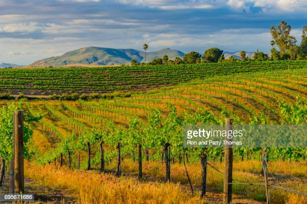 513 fotos de stock e banco de imagens de Temecula Valley - Getty Images