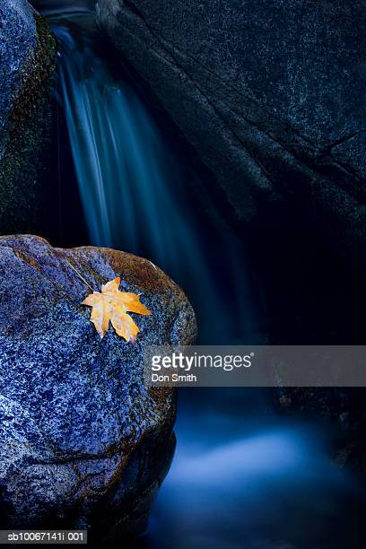 usa, california, yosemite national park, maple leaf on rock beside waterfall at bridalveil creek - don smith stock pictures, royalty-free photos & images