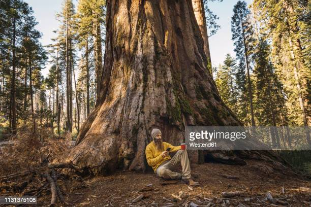 usa, california, yosemite national park, mariposa, man sitting at sequoia tree with cell phone and mug - big bulge stock pictures, royalty-free photos & images
