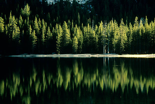 USA, California, Yosemite National Park, Wood at Tenaya Lake