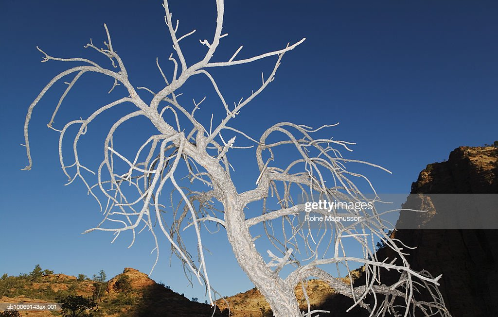 USA, California, Zion National Park, dead tree : Stockfoto