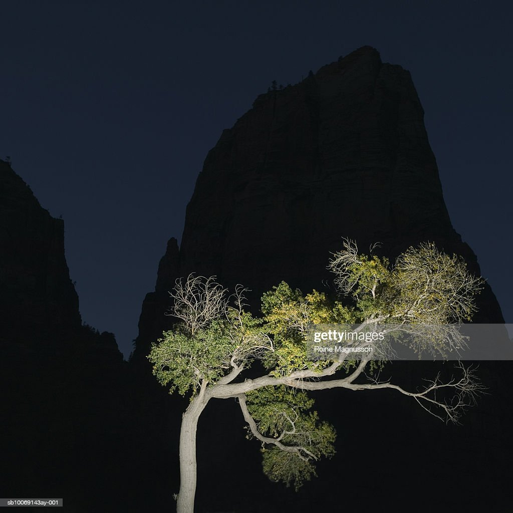 USA, California, Zion National Park, illuminated tree : Stockfoto