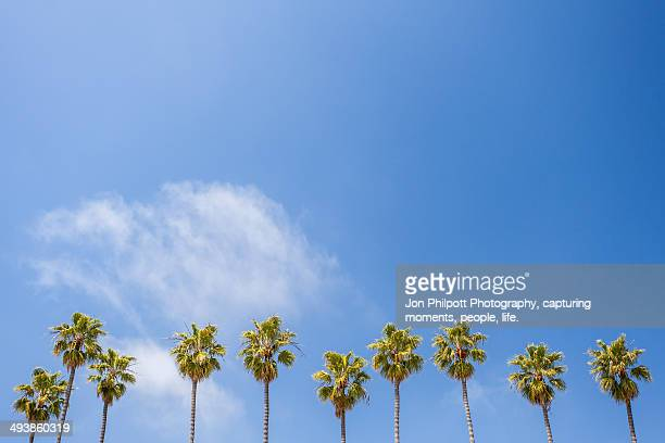 Californian Palms