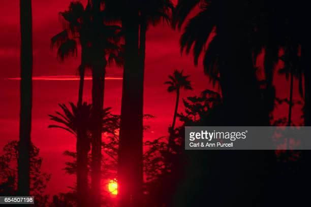 Californian Sunset Through Palm Trees